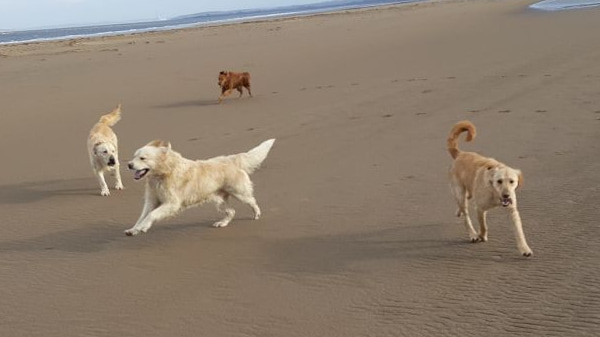 Our dogs on the beech